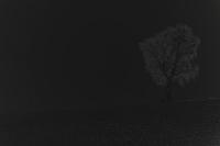 baum 4 - PHOTOGALERIE WIESBADEN - dunkel-schwarzphoto art edition - limitiert limitiert