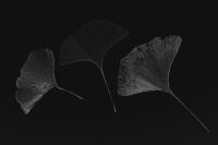 blätter 4 - PHOTOGALERIE WIESBADEN - dunkel-schwarz