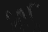 tulpen 3 - PHOTOGALERIE WIESBADEN - dunkel-schwarz
