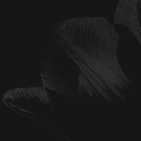 tulpen 6 - PHOTOGALERIE WIESBADEN - dunkel-schwarz