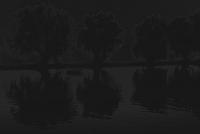 ufer mit weiden - PHOTOGALERIE-WIESBADEN - dunkel-schwarz