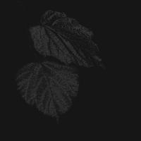 zwei blätter 1 - PHOTOGALERIE WIESBADEN - dunkel-schwarz