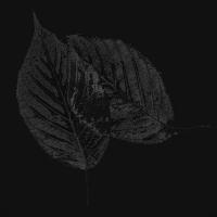 zwei blätter 2 - PHOTOGALERIE WIESBADEN - dunkel-schwarz